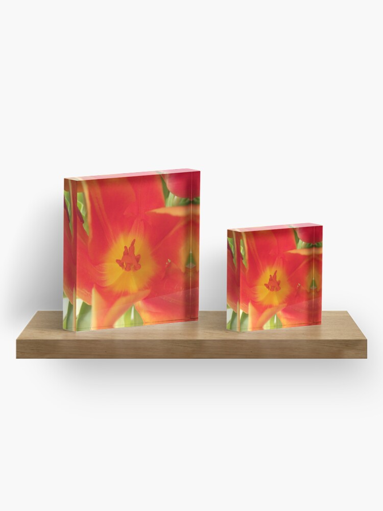Alternate view of a colorful flower dream, tulips, tulip Acrylic Block