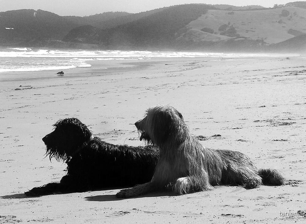 Briard Beach Bums by tanjem