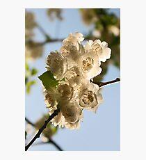 Blossoms I Photographic Print