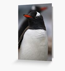 Penguin pair as snow falls Greeting Card