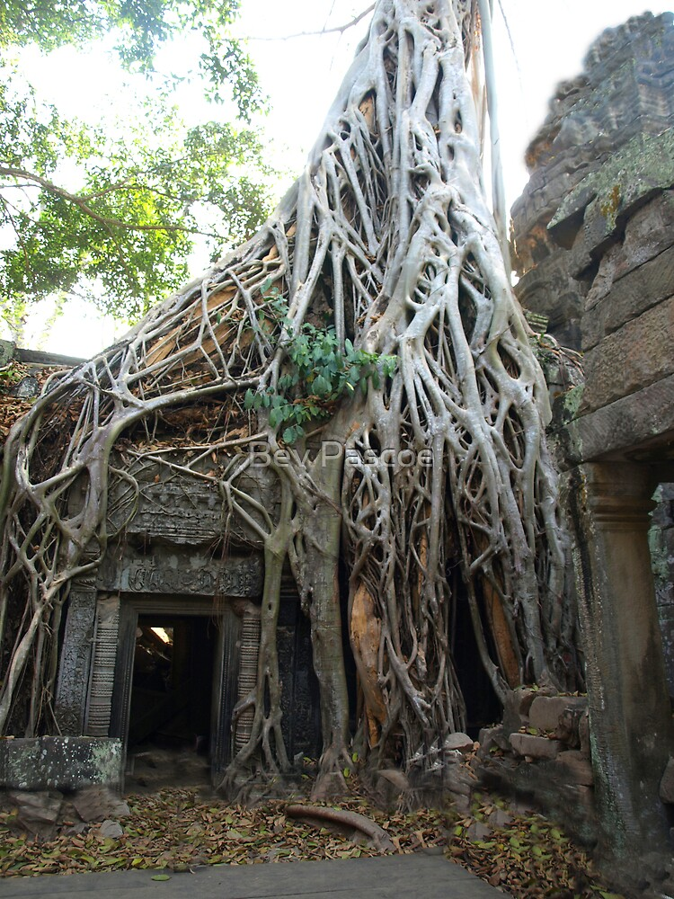 Quot Strangler Fig Tree At Temple Ta Prohm Cambodia Quot By Bev