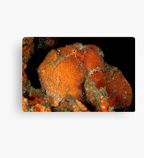 Giant Frogfish Canvas Print