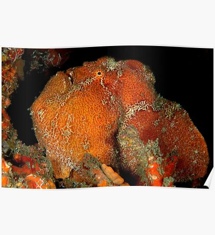 Giant Frogfish Poster