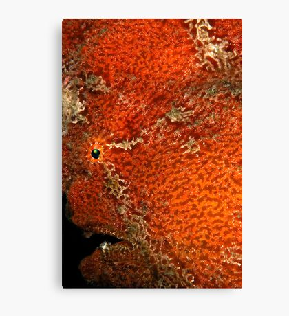 Giant Frogfish Portrait Canvas Print