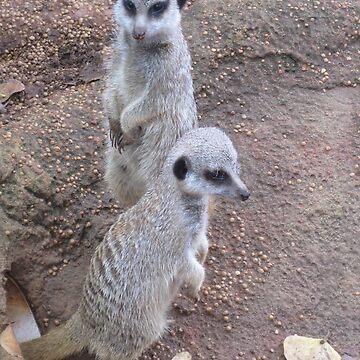 Meerkats by lauren-w