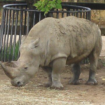 Rhino by lauren-w