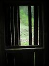 Through the old sawmill window by Mojca Savicki