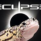 Eclipse Eyes Leopard Gecko by OnlineGeckos