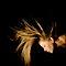 music inspired hair