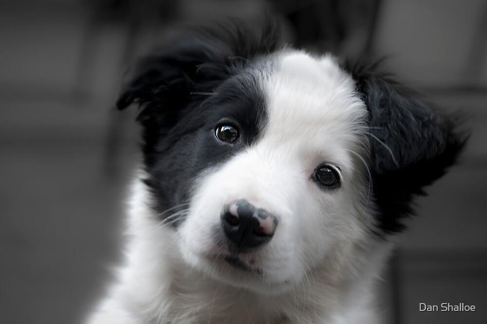 fluffy furry puppy by Dan Shalloe