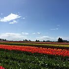 A Windy Day in Skagit Valley by SavingMemories