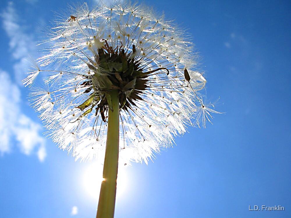 Dandelion Puff by L.D. Franklin