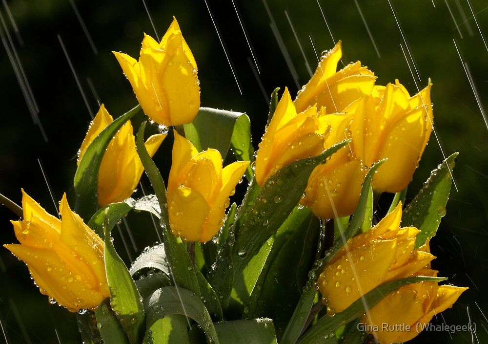 Spring Shower by Gina Ruttle  (Whalegeek)