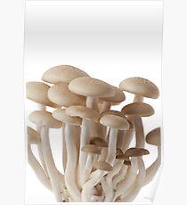 Brown mushrooms Poster