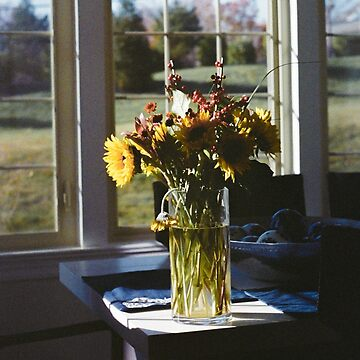 Flowers in the Sun by GaryCuningham