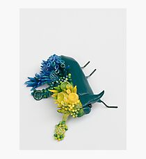 Teal Beetle and Corals in Seaside Colors Photographic Print