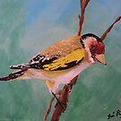 Great Tit - Wildlife/Bird Portrait by TamiParrington