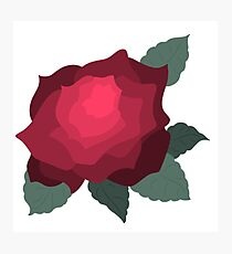 Simple Yet Lovely Rose Photographic Print