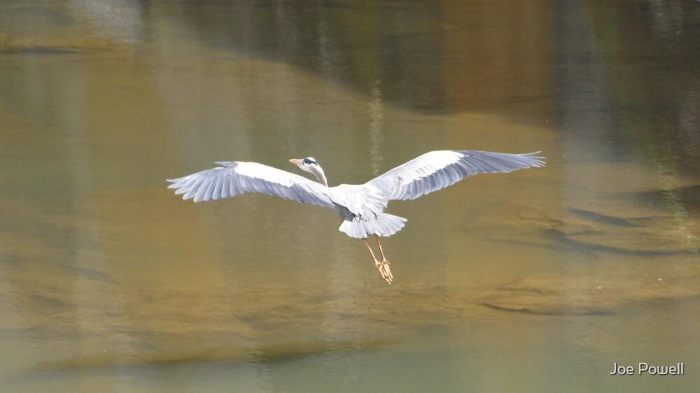 In Flight by Joe Powell