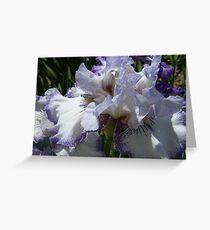 A beautiful purple and white Iris....... Greeting Card