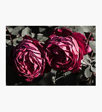 Couple of red roses Photographic Print