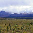 Teklanika River Valley - Denali National Park by justintapp