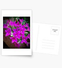 Pink Blooms Postcards