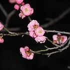 Spring - Pink and Black by agnessa38