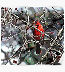 Cardinal in Spring Poster