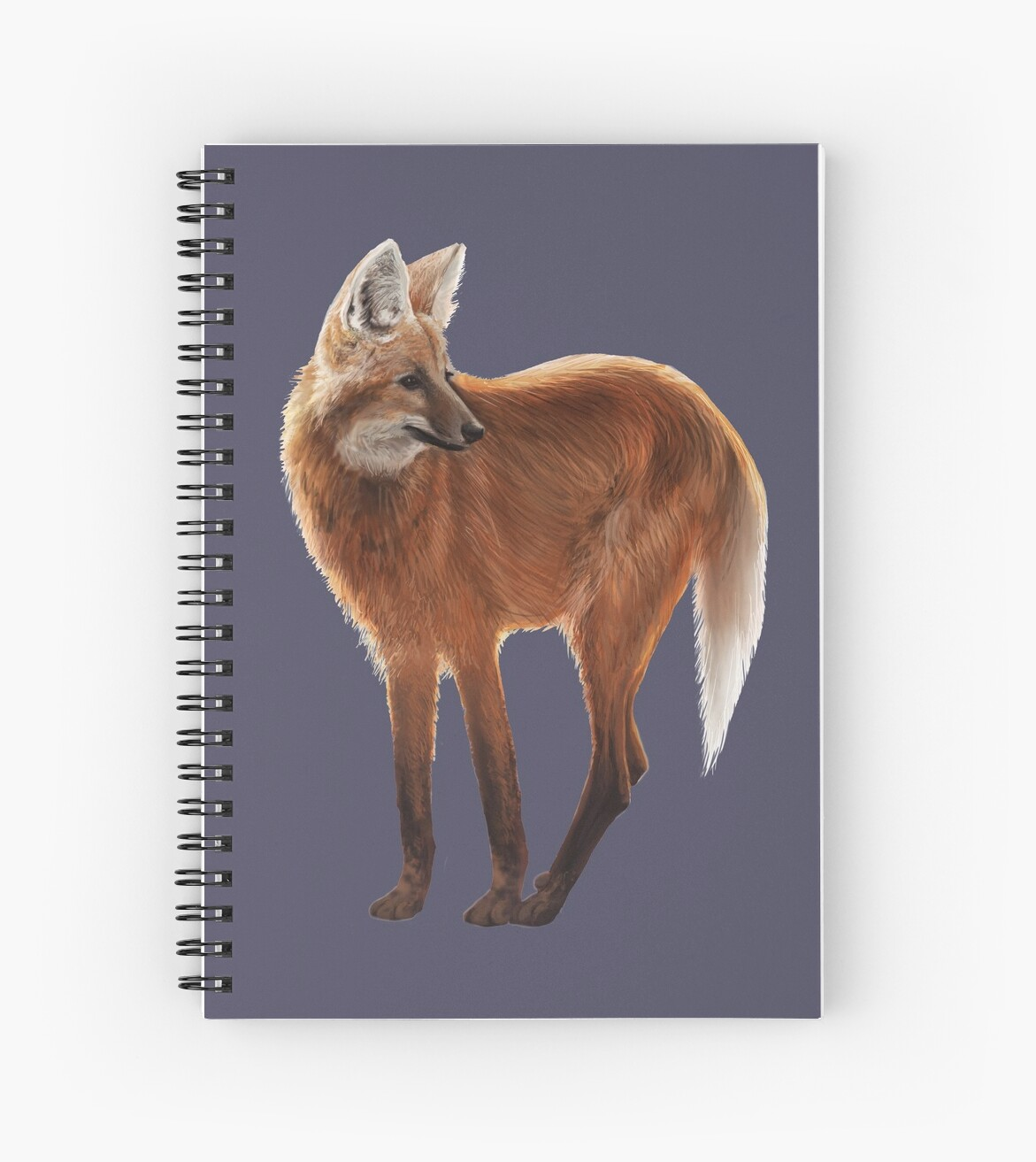 Maned Wolf Illustration by Audrey Howell