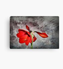 Time to flower Canvas Print
