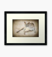 If looks could kill ..... Framed Print