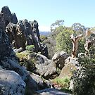 A Landscape of Rocks and Trees by kalaryder