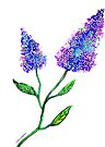 Lilacs in Bloom by Linda Callaghan