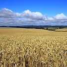 Table Cape Wheat Field by phillip wise