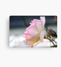Roses are  Canvas Print