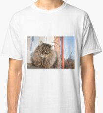 cat pet Classic T-Shirt