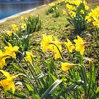 Spreading Sunshine Along the Charles by Owed To Nature