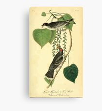 James Audubon Vector Rebuild - The Birds of America - From Drawings Made in the United States and Their Territories V 1-7 1840 - Tyrant Flycatcher or King Bird Canvas Print
