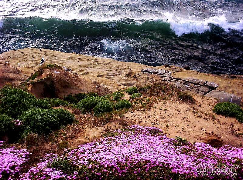 Southern California Beach by rocamiadesign