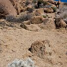 Desert Landscape by Nickolay Stanev