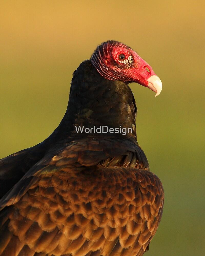 Turkey Vulture Portrait by WorldDesign