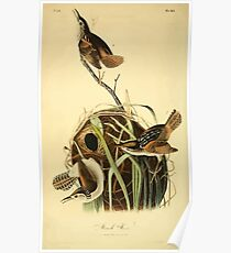 James Audubon Vector Rebuild - The Birds of America - From Drawings Made in the United States and Their Territories V 1-7 1840 - Marsh Wren Poster
