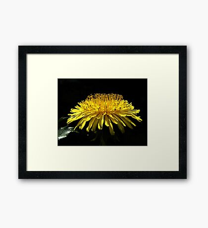 A Weed You Say??? Framed Print