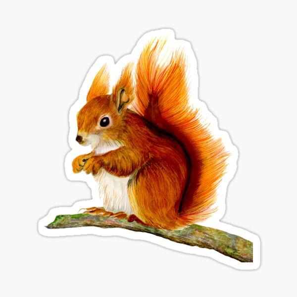 Red Squirrel Animal Watercolor Painting Wildlife Artwork Sticker