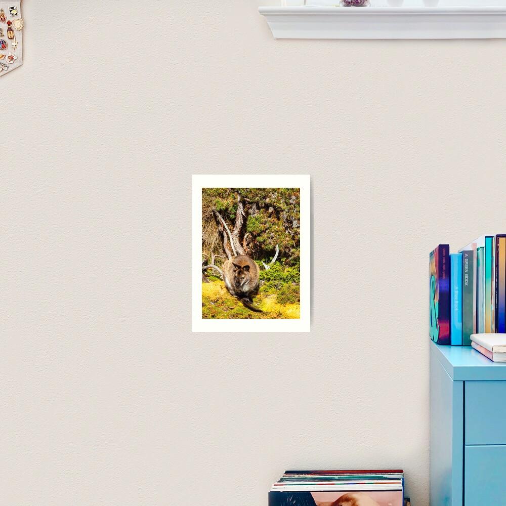 Bennetts Wallaby Art Print