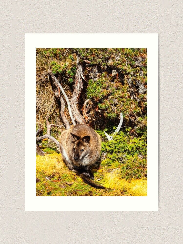 Alternate view of Bennetts Wallaby Art Print