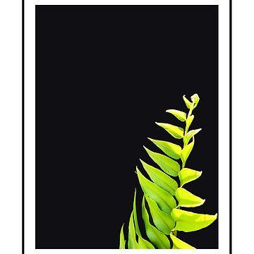 Vibrant Green Leaf Study on Black by waldomalan