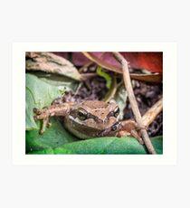 Eastern Common Froglet Art Print