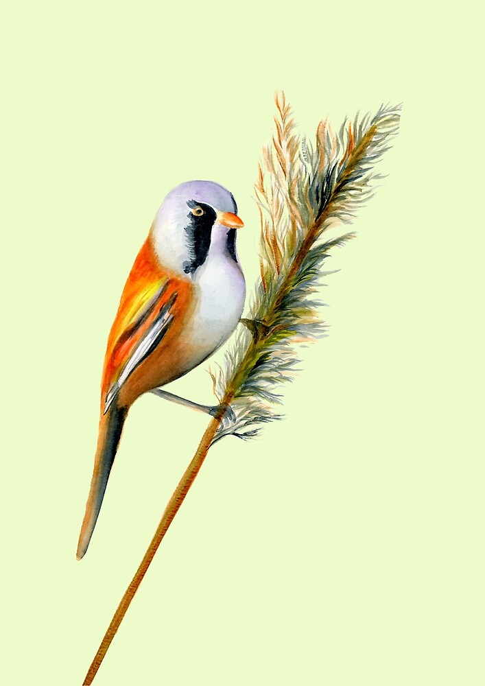 Bearded Tit Bird Watercolor Artwork Bird Art by Alison Langridge